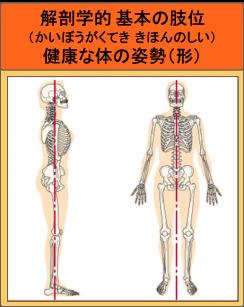 解剖学的基本の肢位(健康な体の姿勢)
